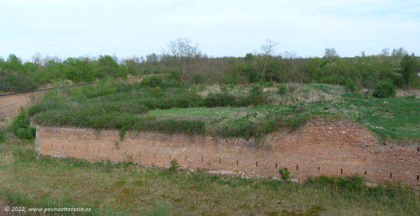 shrom-26-201204